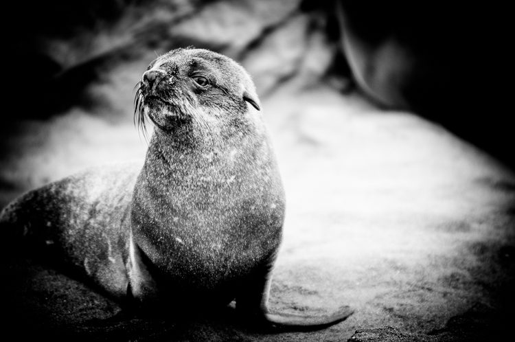 Seal pup posing for the camera