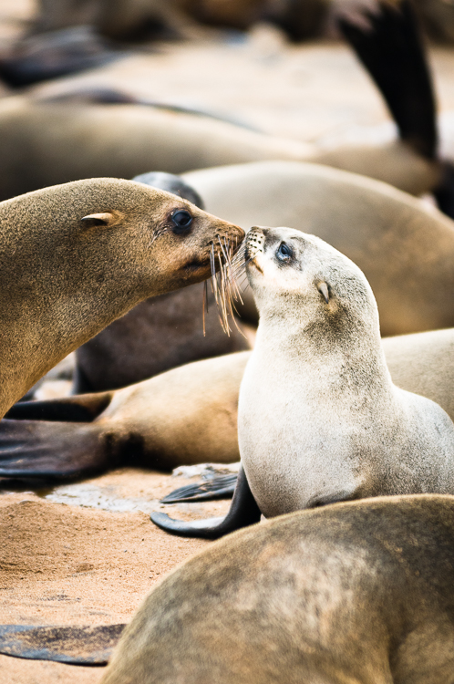 Seal pup and mother greet each other