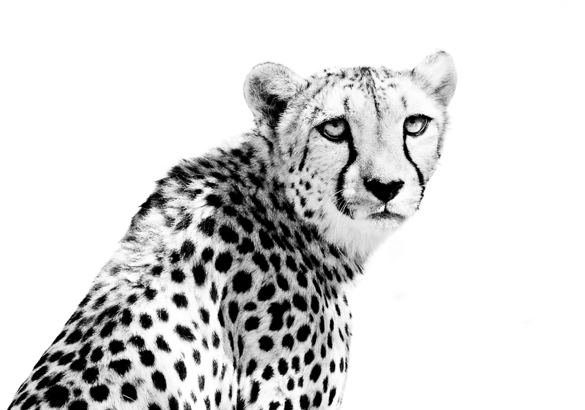 wildlife - fine art photography