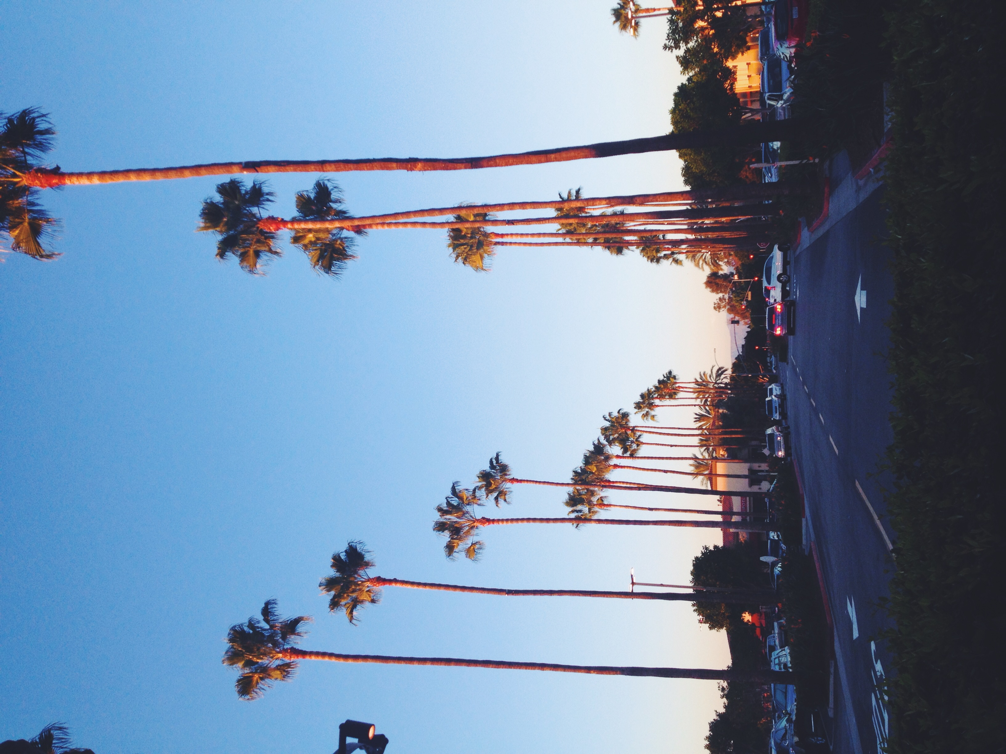 In love with palm trees!