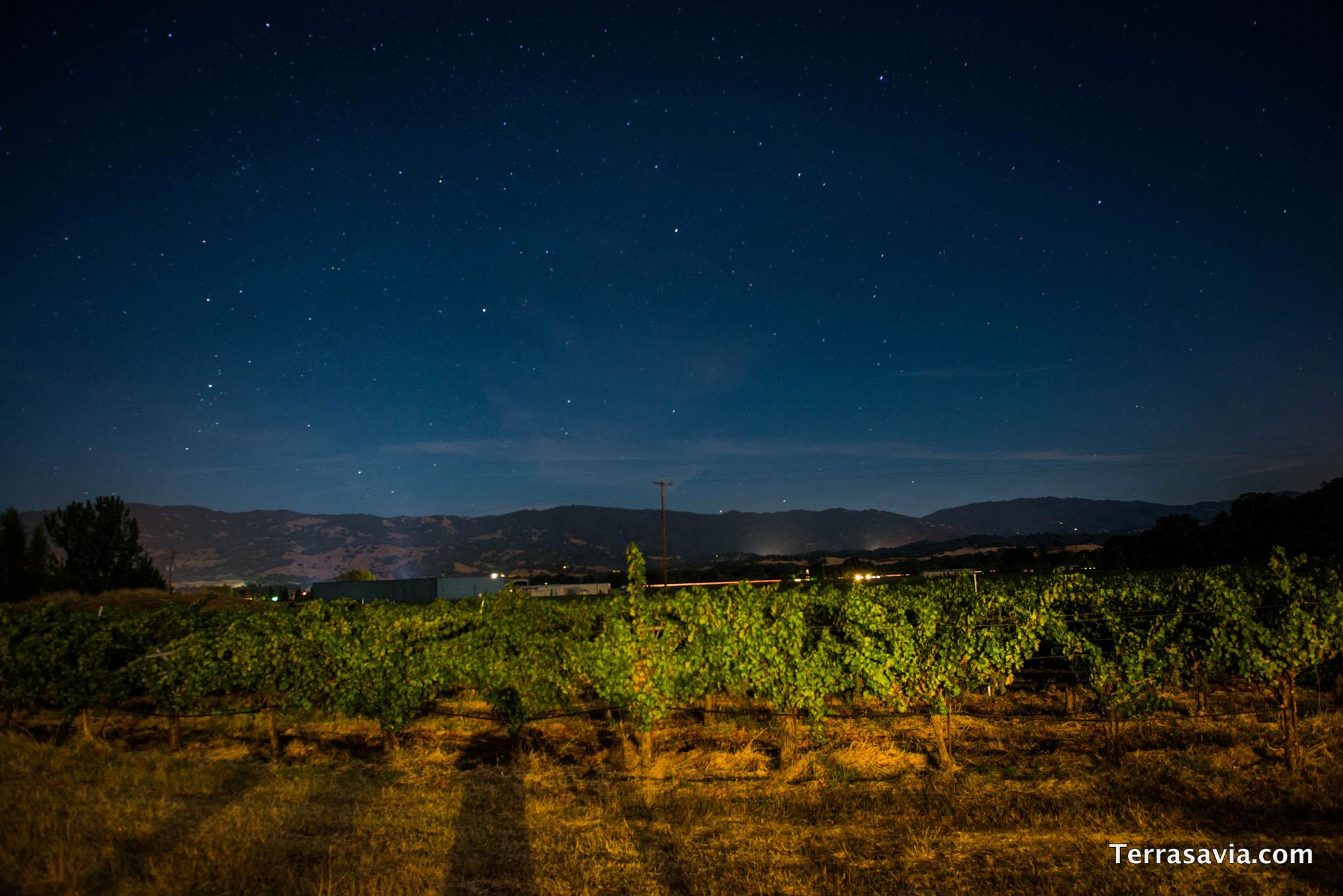 Vineyard View 2