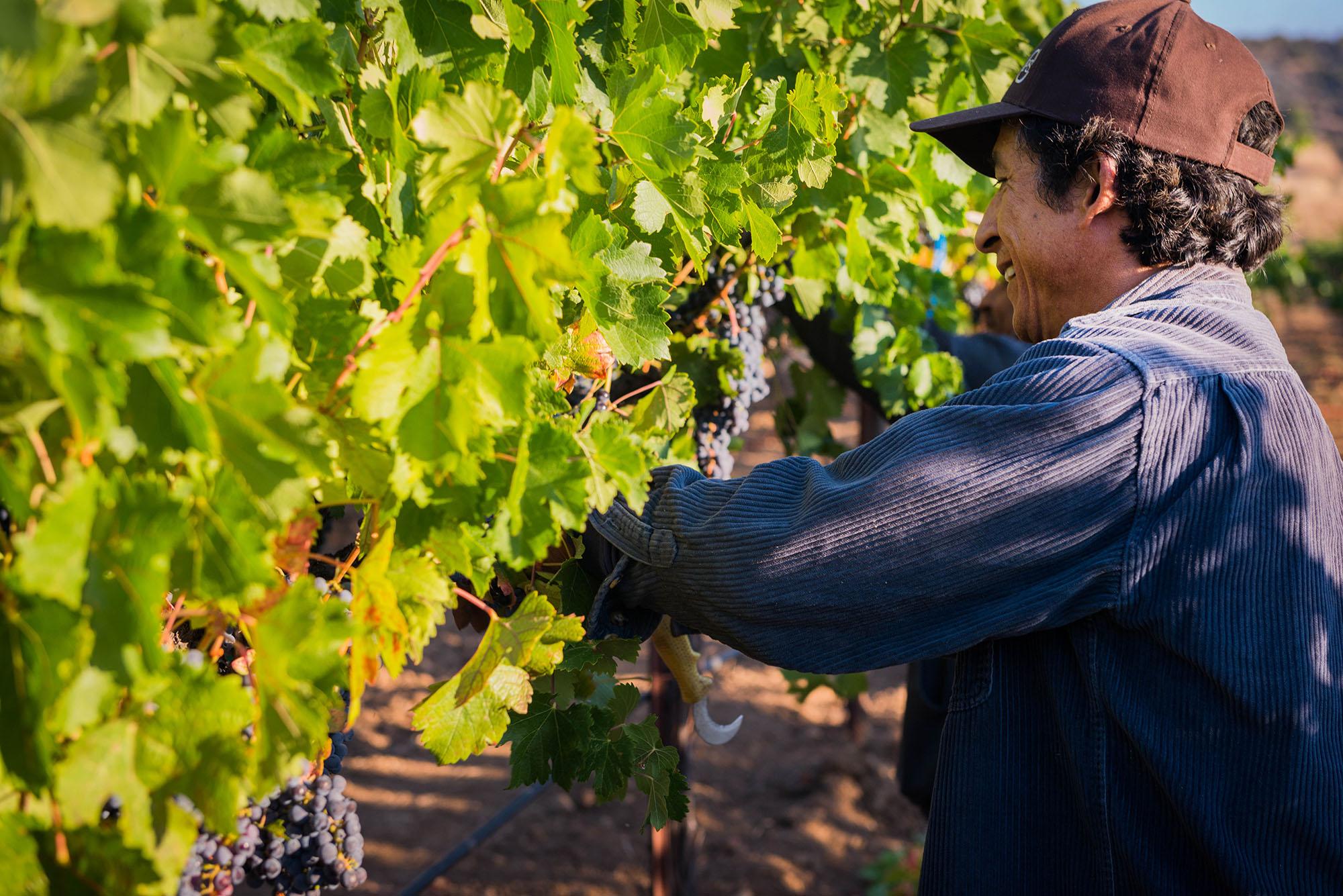 Vineyard Management