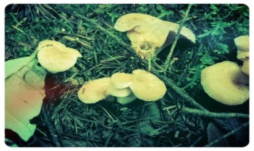 wild mushrooms2