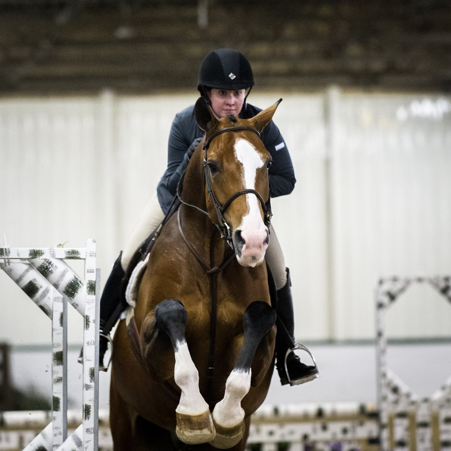 Lauren Robishaw and Bon Vivant making the debut in the Amateur Adult Hunters at Ledges Winter Series 2016