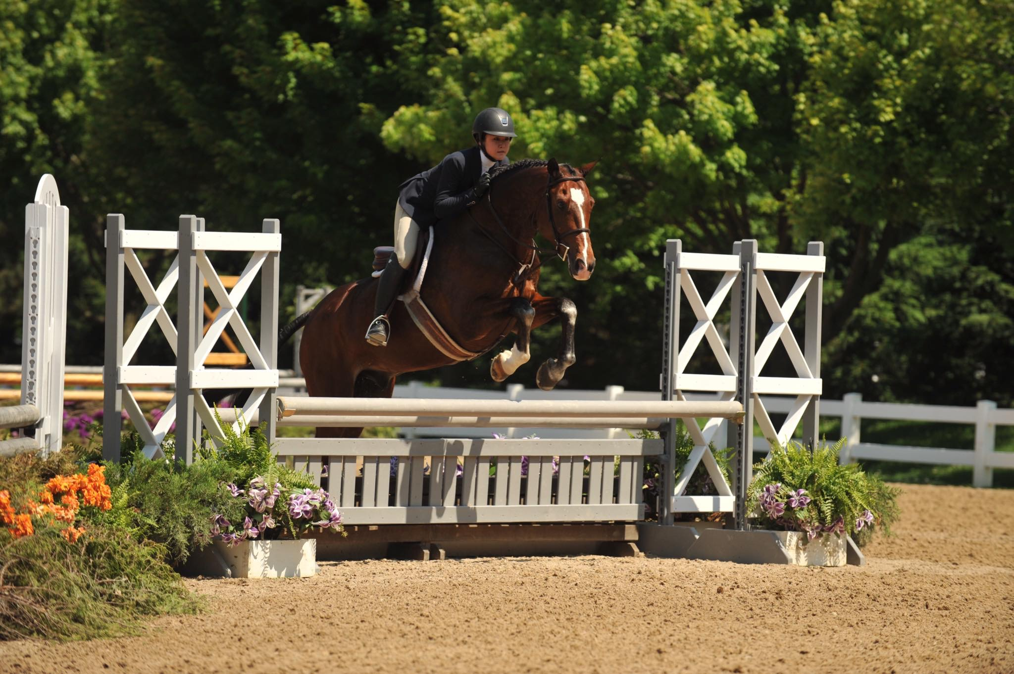 Congratulations Susan Kubala and Pingree Oaks Farm on your purchase of MTM Up2U! We wish you continued success with this lovely horse!