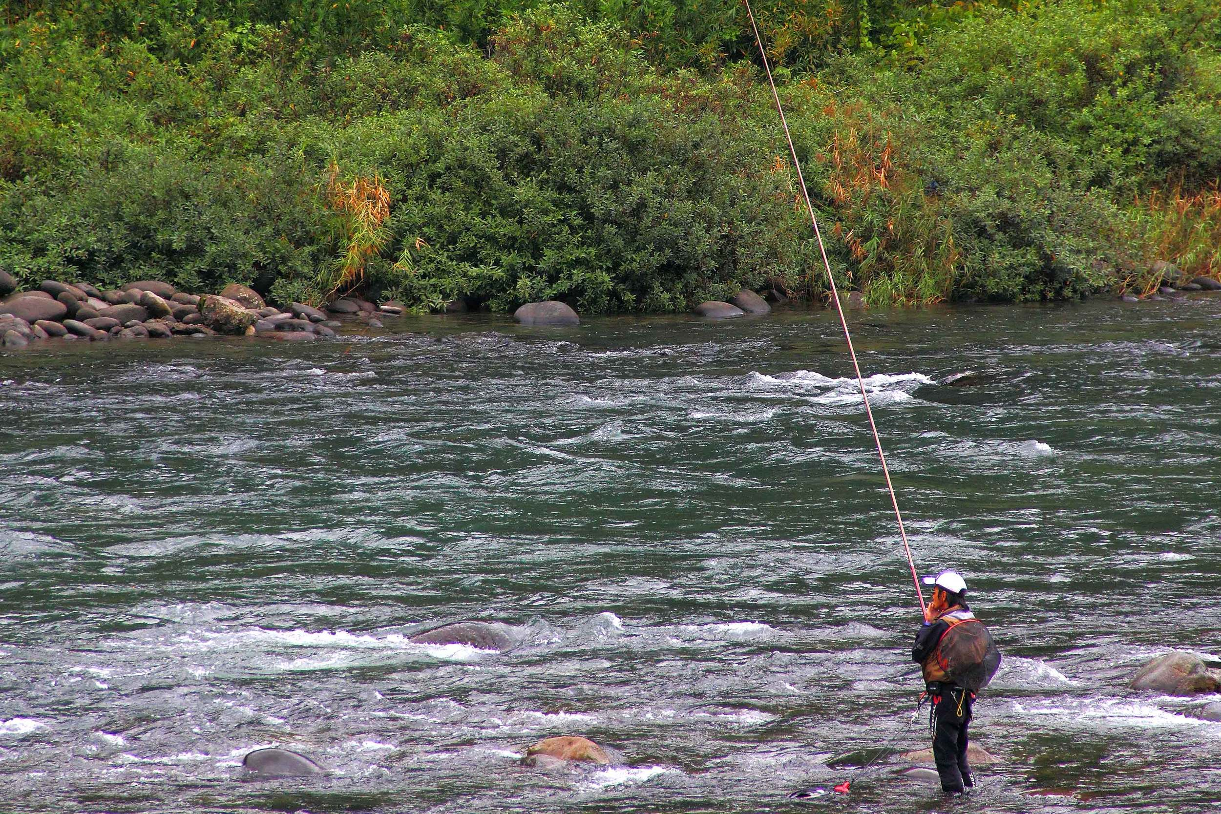 "Fishing for ""Ayu"", Nagara River Gujo Hachiman."
