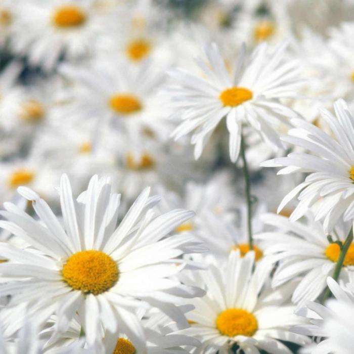 spring-flowers-wallpaper1.jpg