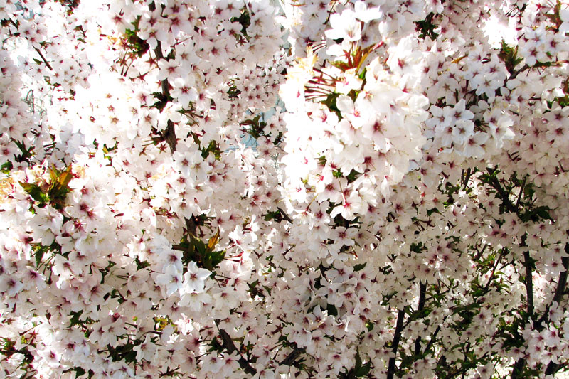 Spring-by-Katarina-Dahlstrom-09.jpg