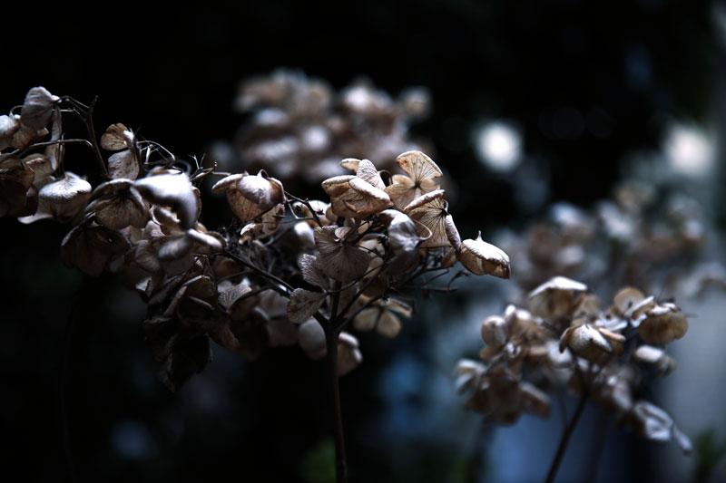 Spring-by-Katarina-Dahlstrom-16.jpg
