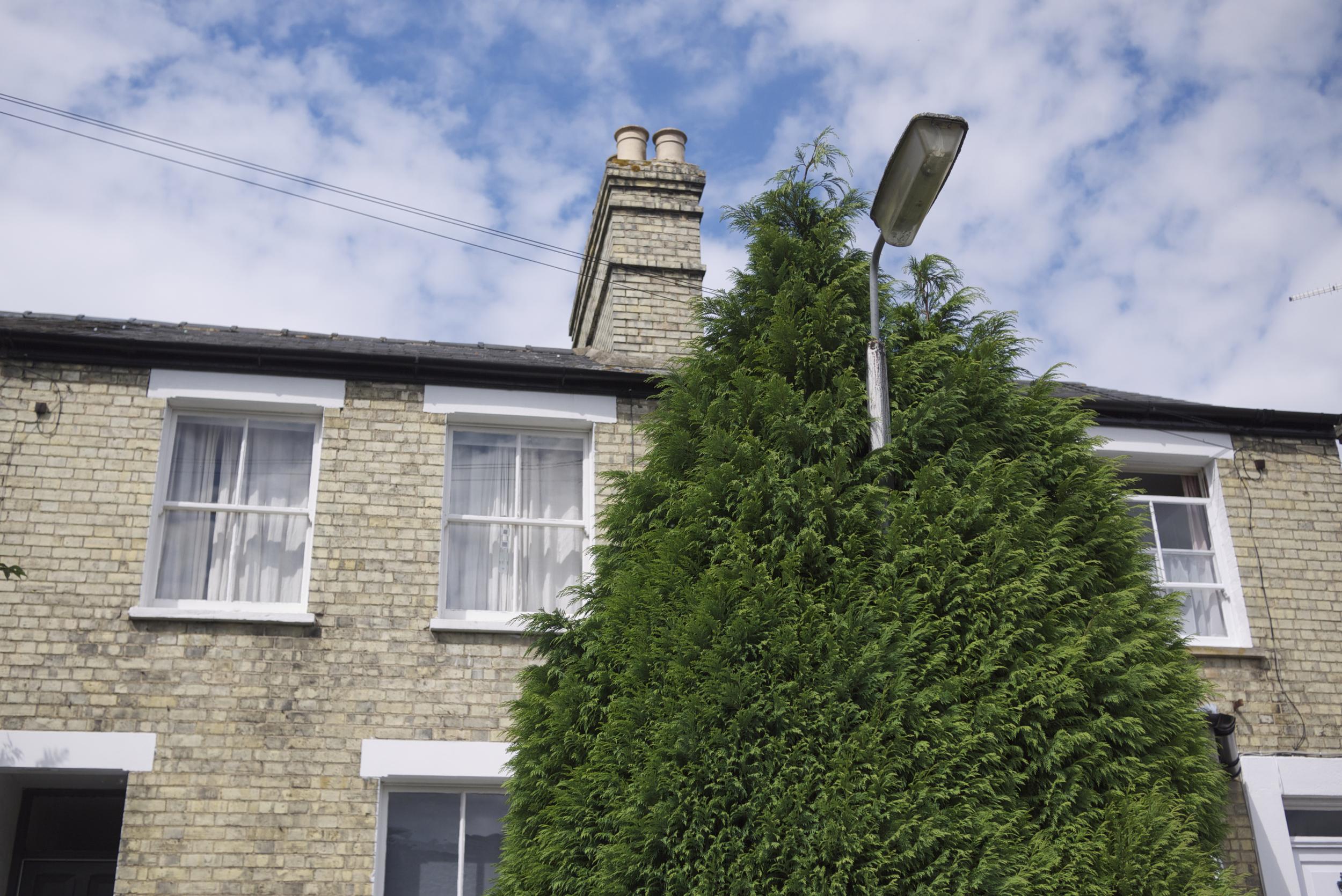 hedge lamp (2).jpg