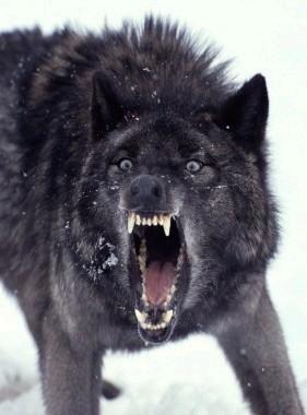 Insanity Wolf!