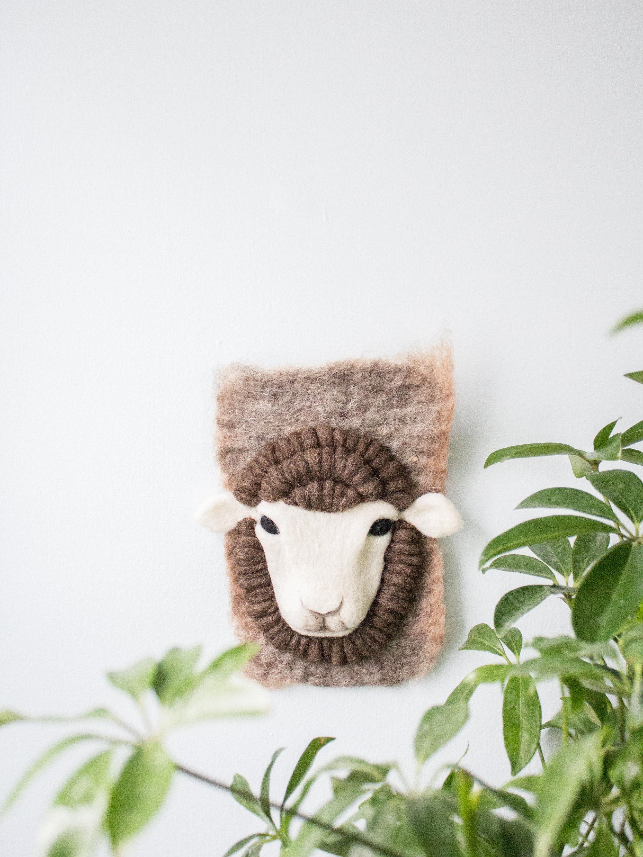 Small Merino Sheep