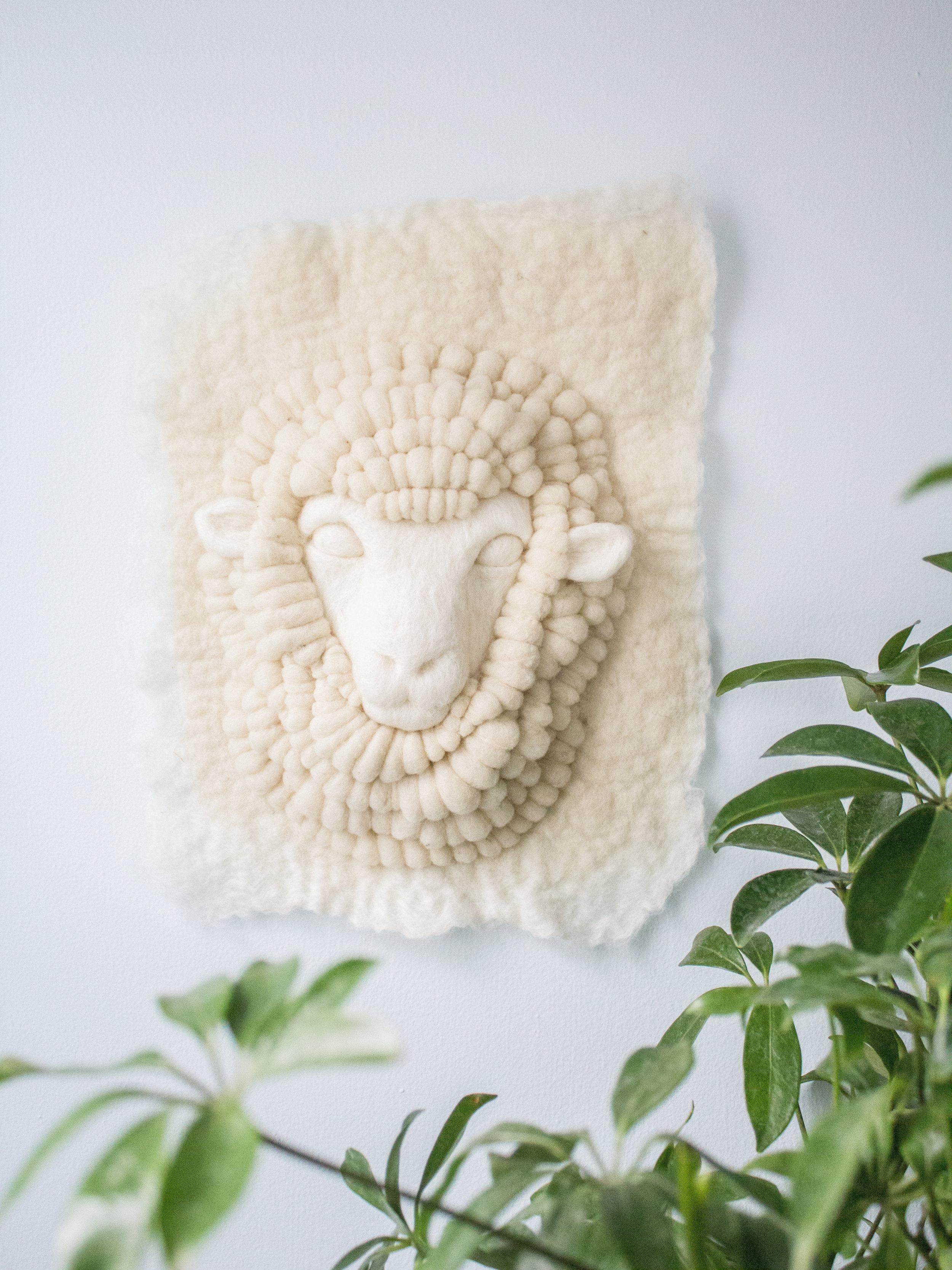 White Merino Sheep