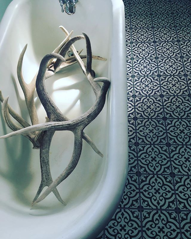 Shed elk horns in a claw foot tub + awesome tile. . . . #curiosities #🛁 #🦌 #🌵