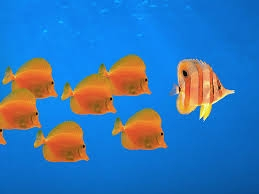Fish with 1 leader.jpeg