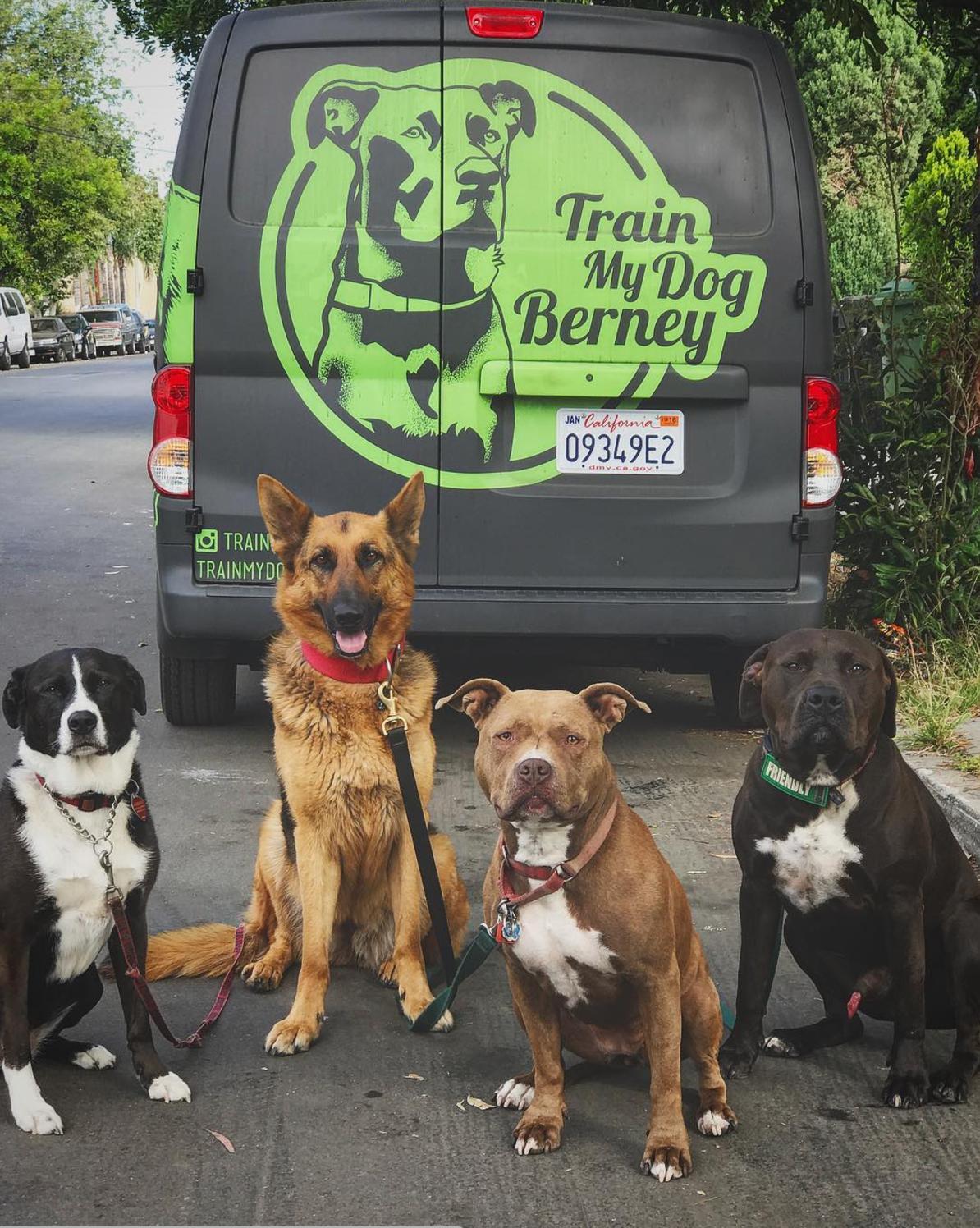 Train My Dog Berney Brand Design | EyeSavvy Design | Kiki Bakowski | Brand Design Studio #BrandDesign #BrandDesignInspiration #BrandIdentity #Logo #Marketing #Design #BrandInspiration #TshirtDesign #VisualBrand