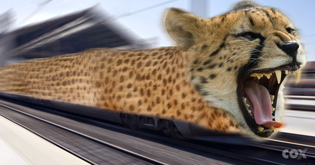 faster Chee Chee train