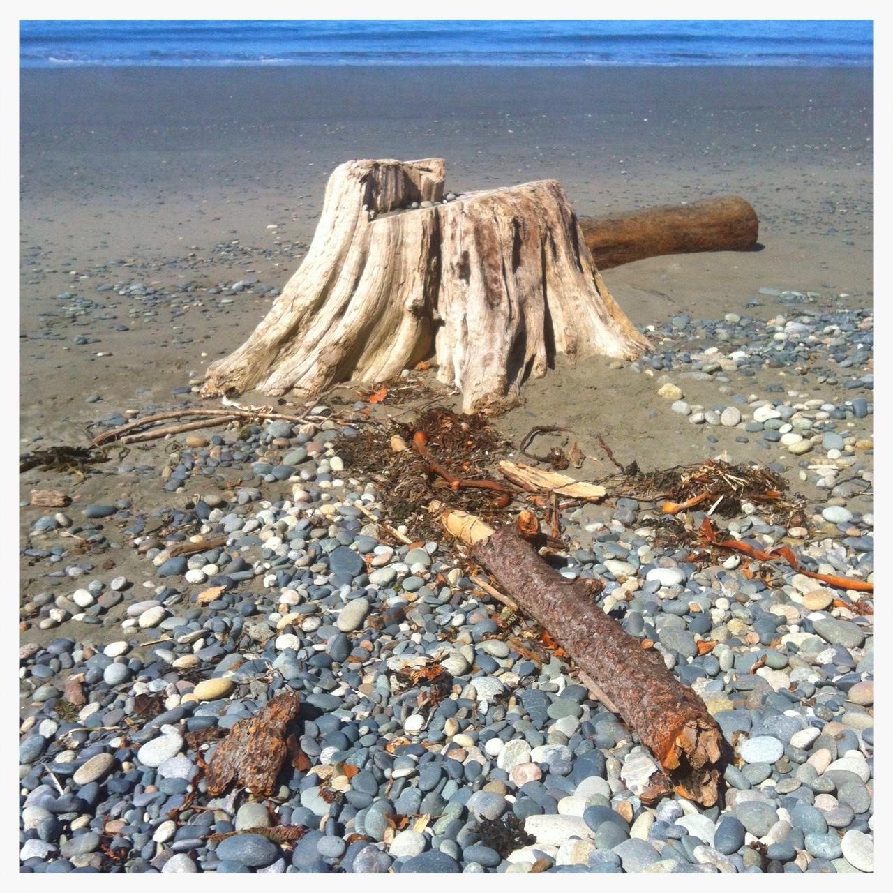 BeachStump.JPG