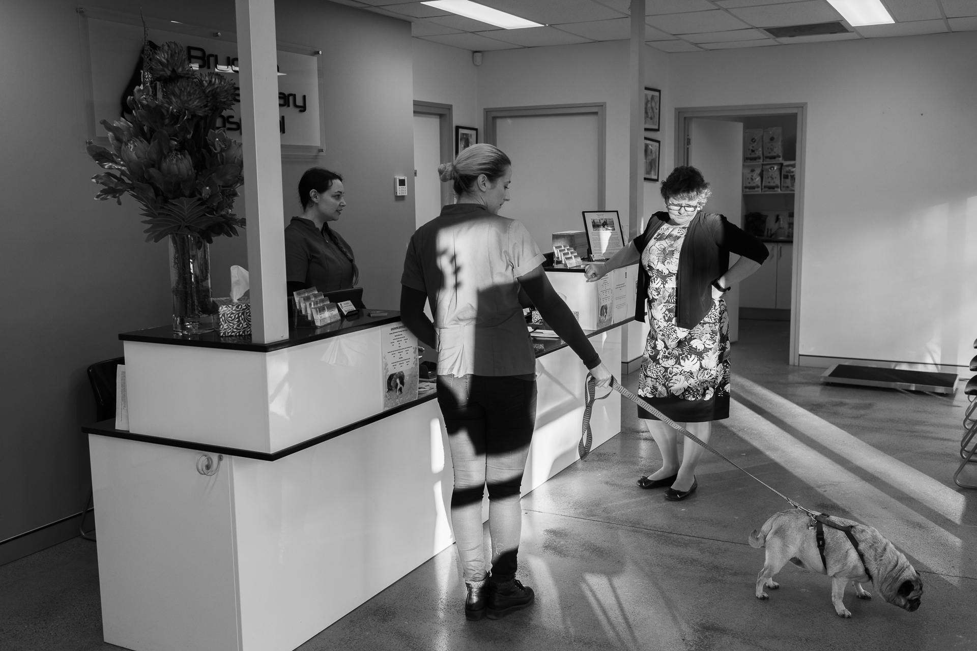 Regular client, Louise Dobson ( right) , drops Rubi off and chats with Receptionists Kelly Haslop ( left ) and Sorrel Nation. Rubi is having an ultrasound to check for stones.  16 March, 2018.
