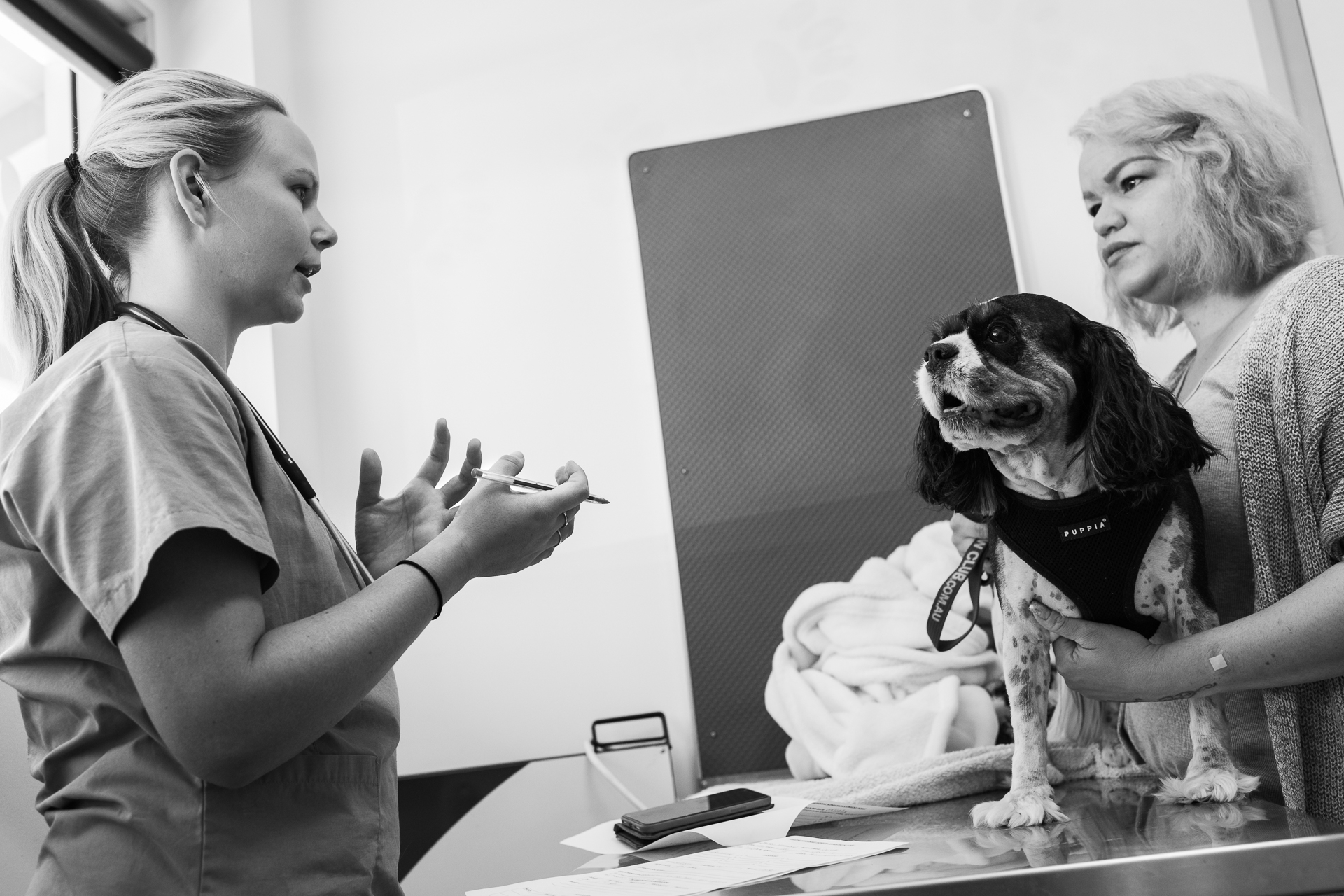 Head Nurse Stephanie Robertson admits Oliver for surgery to repair a torn Cranial Cruciate Ligament (CrCL), relating the necessary details to Oliver's owner, Xarlene Castro.  9 March, 2018.