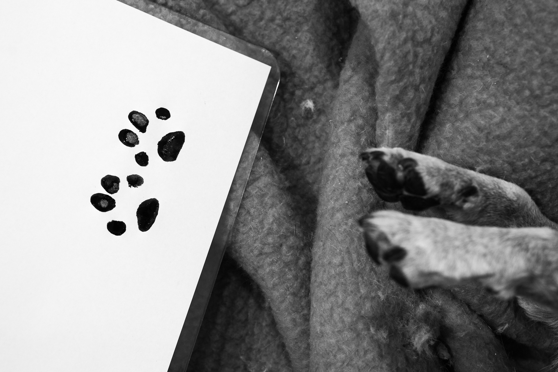 The paw prints will be sent with a card to the deceased animal's owners.  6 July, 2018.