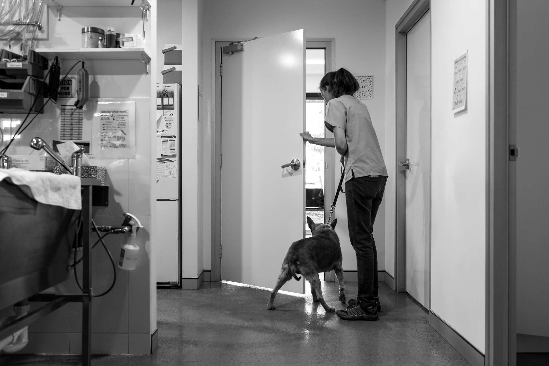 Nurse Chelsea Rose returns a dog during the final part of the discharge process.  16 February, 2018.