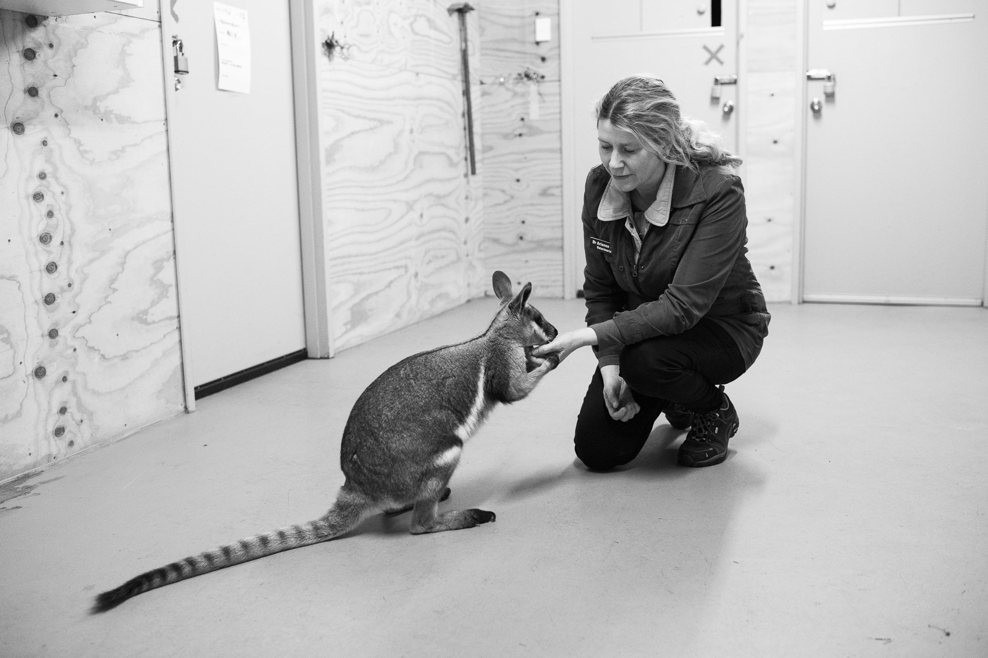 Dr Arianne Lowe with Lily, one of the animals cared for at the  Tidbinbilla Nature Reserve  where Lowe's work the reserve's vet centre includes nutrition, surgery and education .   5 July, 2018. Tidbinbilla, ACT.