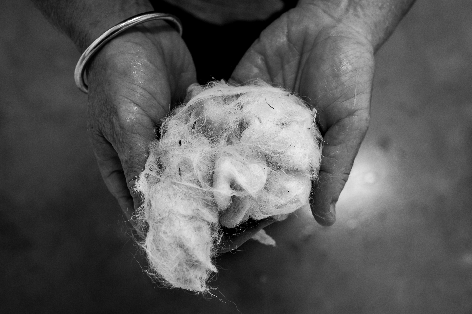 Nurse/Groomer Maree Watt shows some of the fur that has come off during the grooming of a large dog, Ghost. Included are a few grass seeds, the nemeses of long-haired dogs.  24 January, 2018.