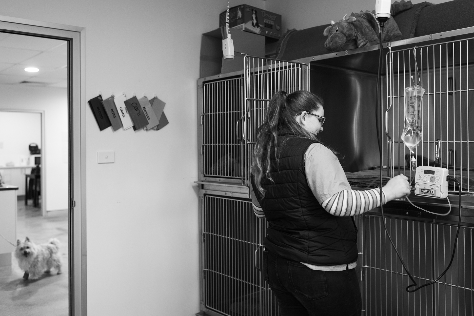 Nurse Kelsey Savage cleans the kennel of a dog who stayed overnight after surgery the previous day.  6 July, 2018.