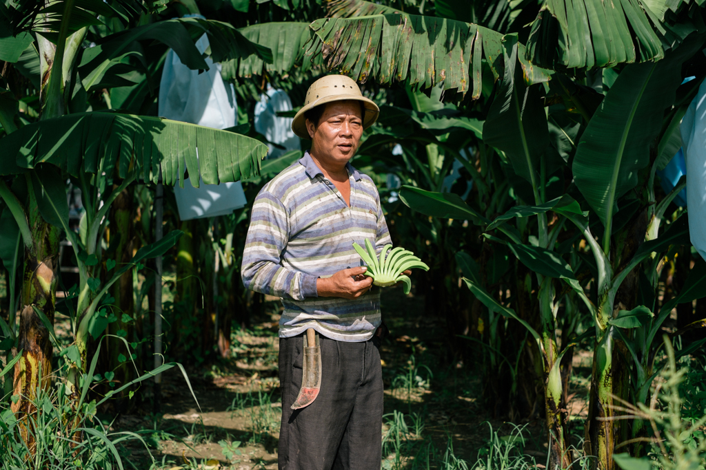 New York Times August 2013 The Taiwan banana industry