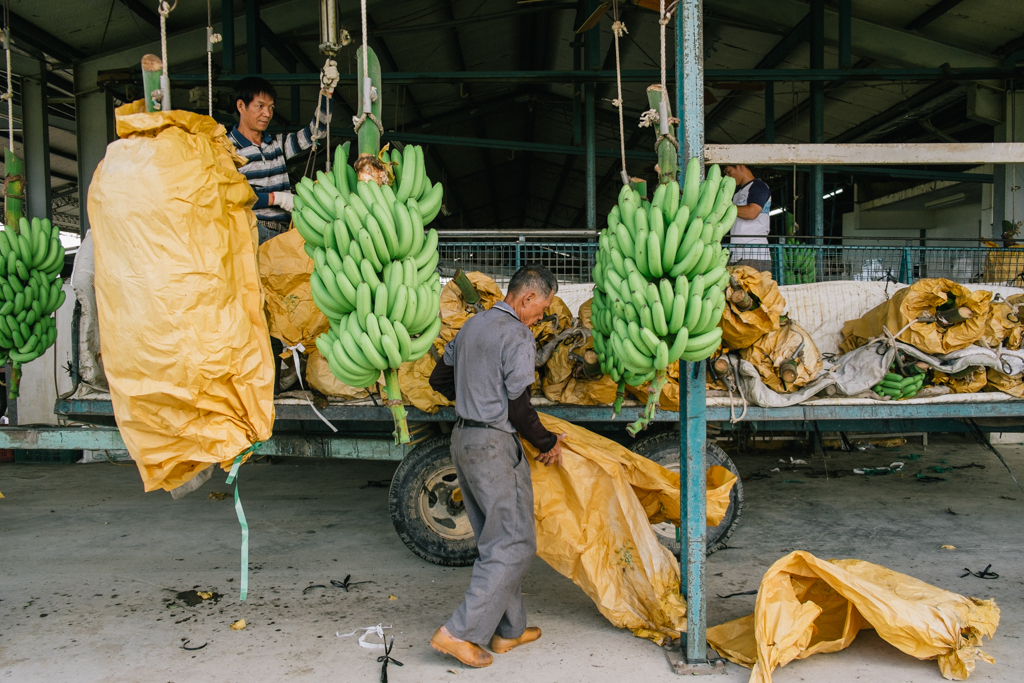 New York Times August 2013   he Taiwan banana industry