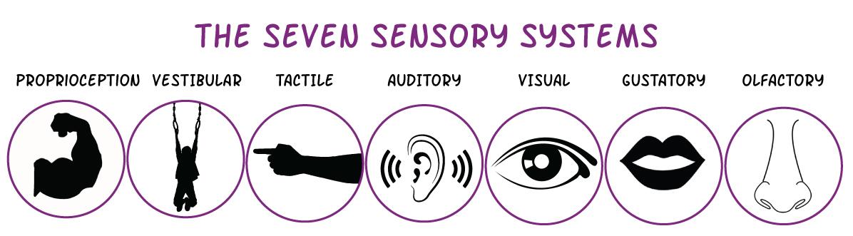 seven-sensory-systems.jpg