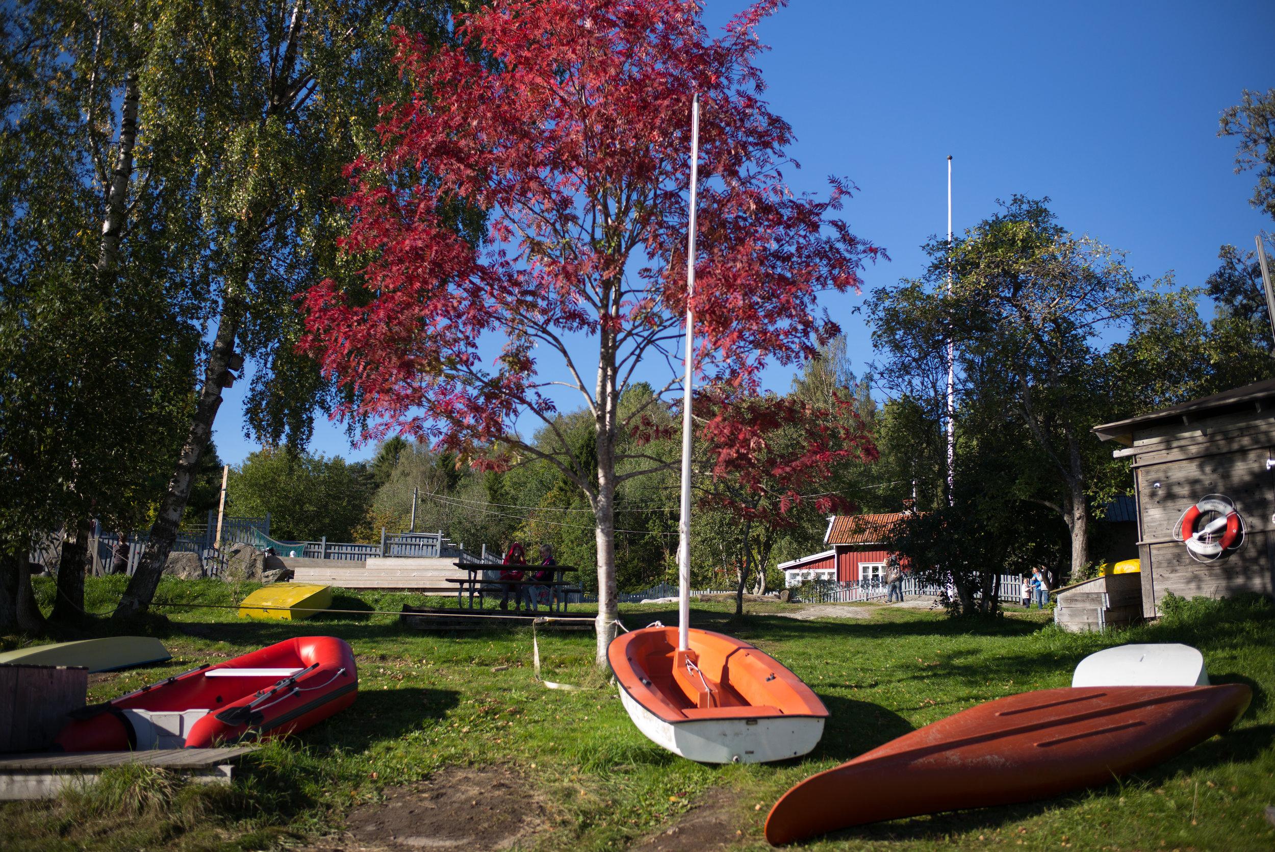 rött träd.jpg