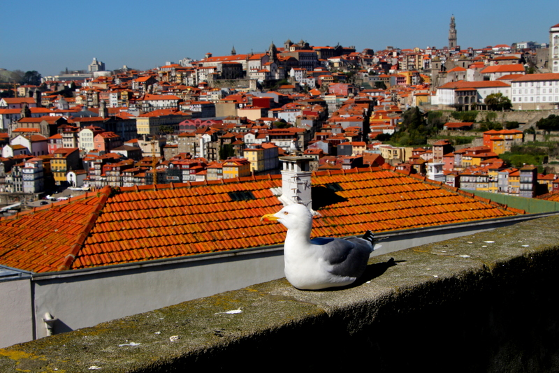 26-2015-03-07 Oporto Portugal (119).jpg