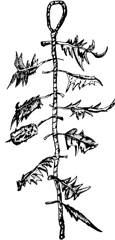 A witch's ladder.