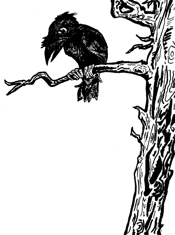 Crow in a tree.
