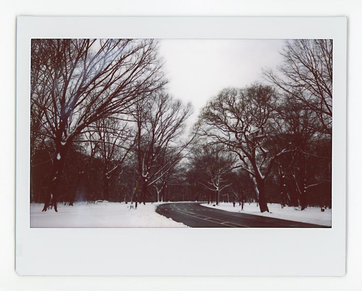 03.02.19 Prospect Park 005 copy.jpg