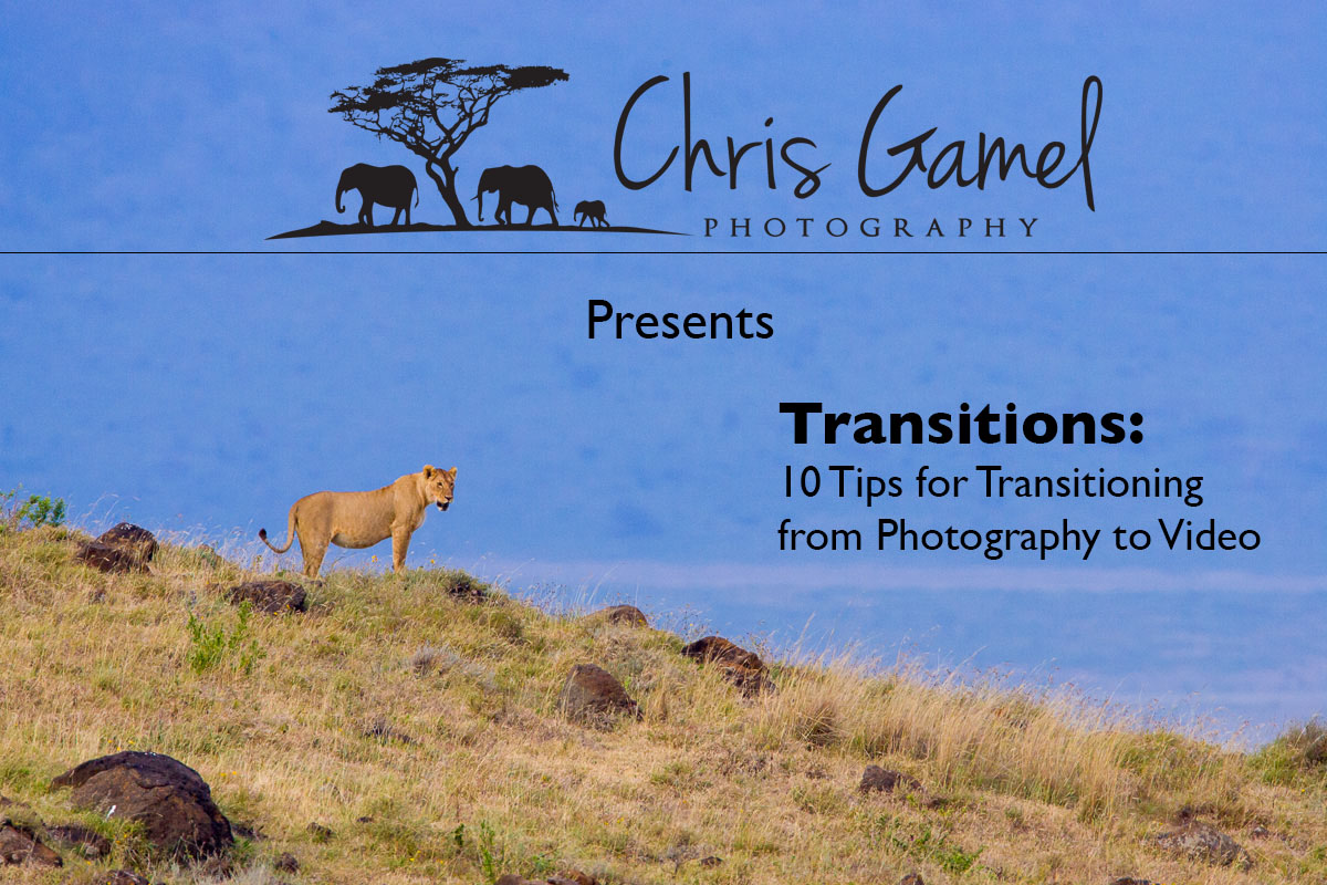 Female lion standing on ridge, Ngorongoro crater, Tanzania.