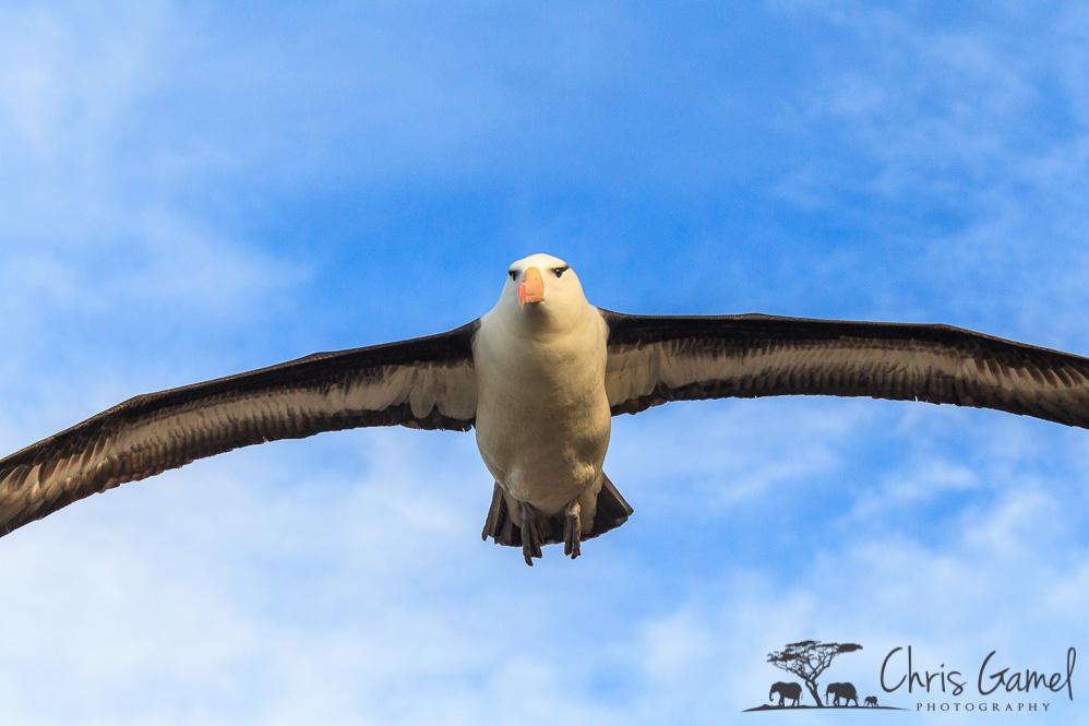 Dramatic Flight