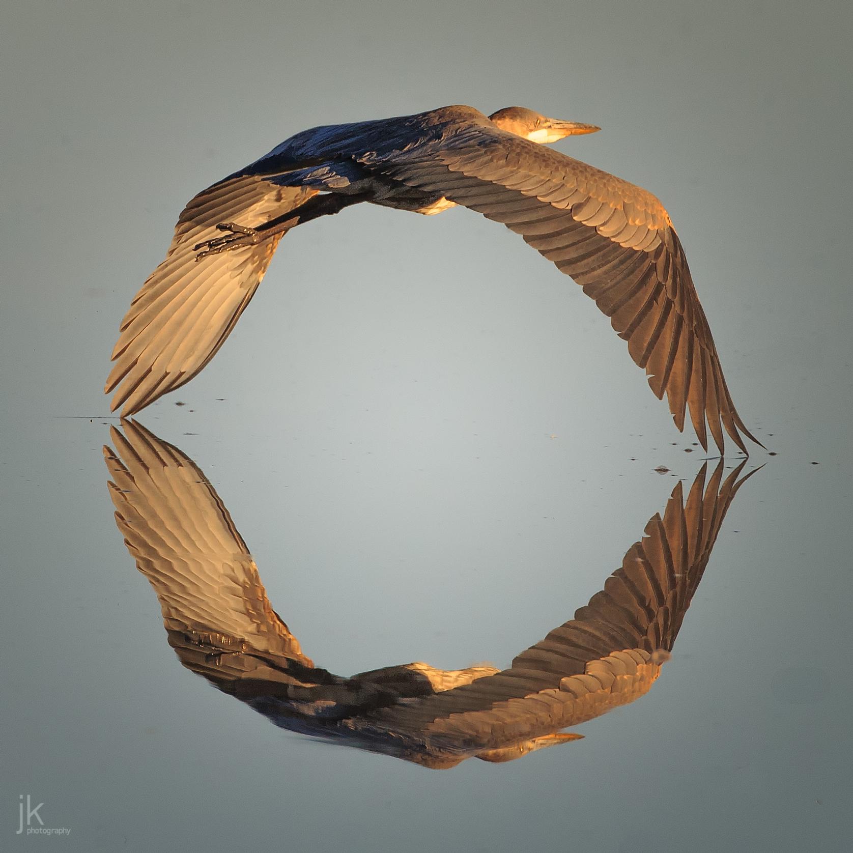 20180410-birds=jkp-9.jpg