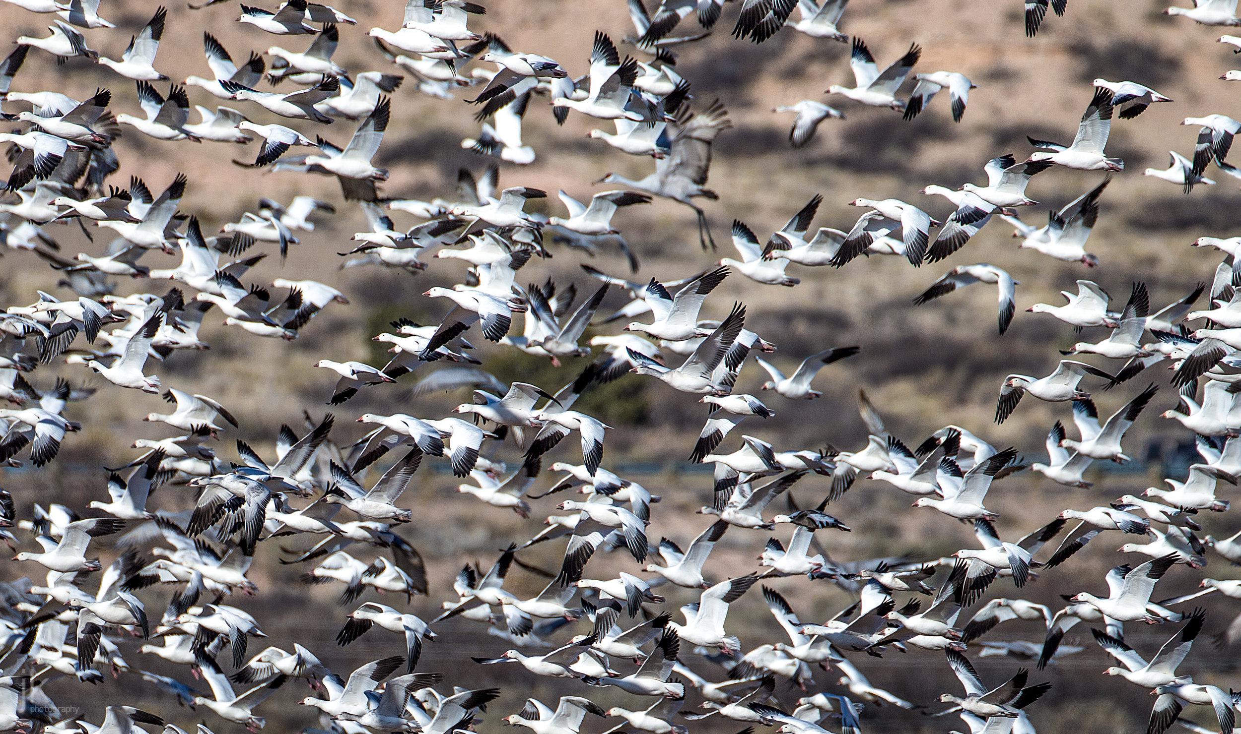 20180410-birds=jkp-11.jpg