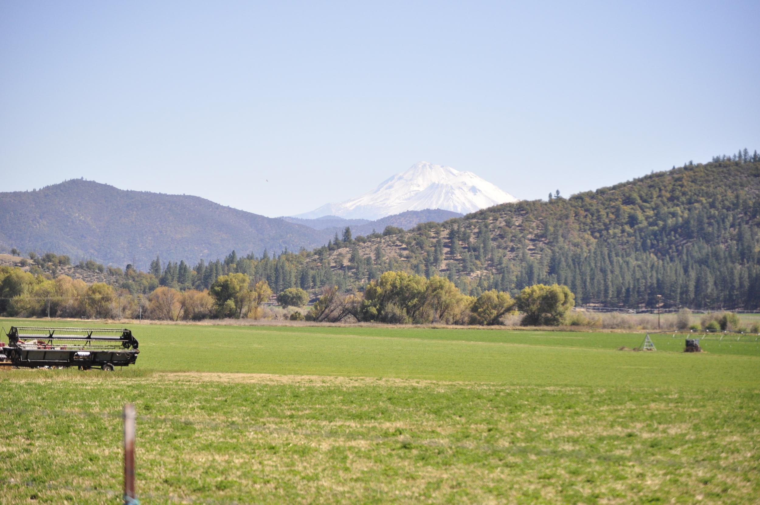 Scott Valley with Mt. Shasta in the background.