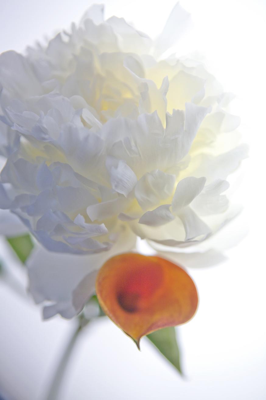 Peony & Red Orange Iris   No.  B5024