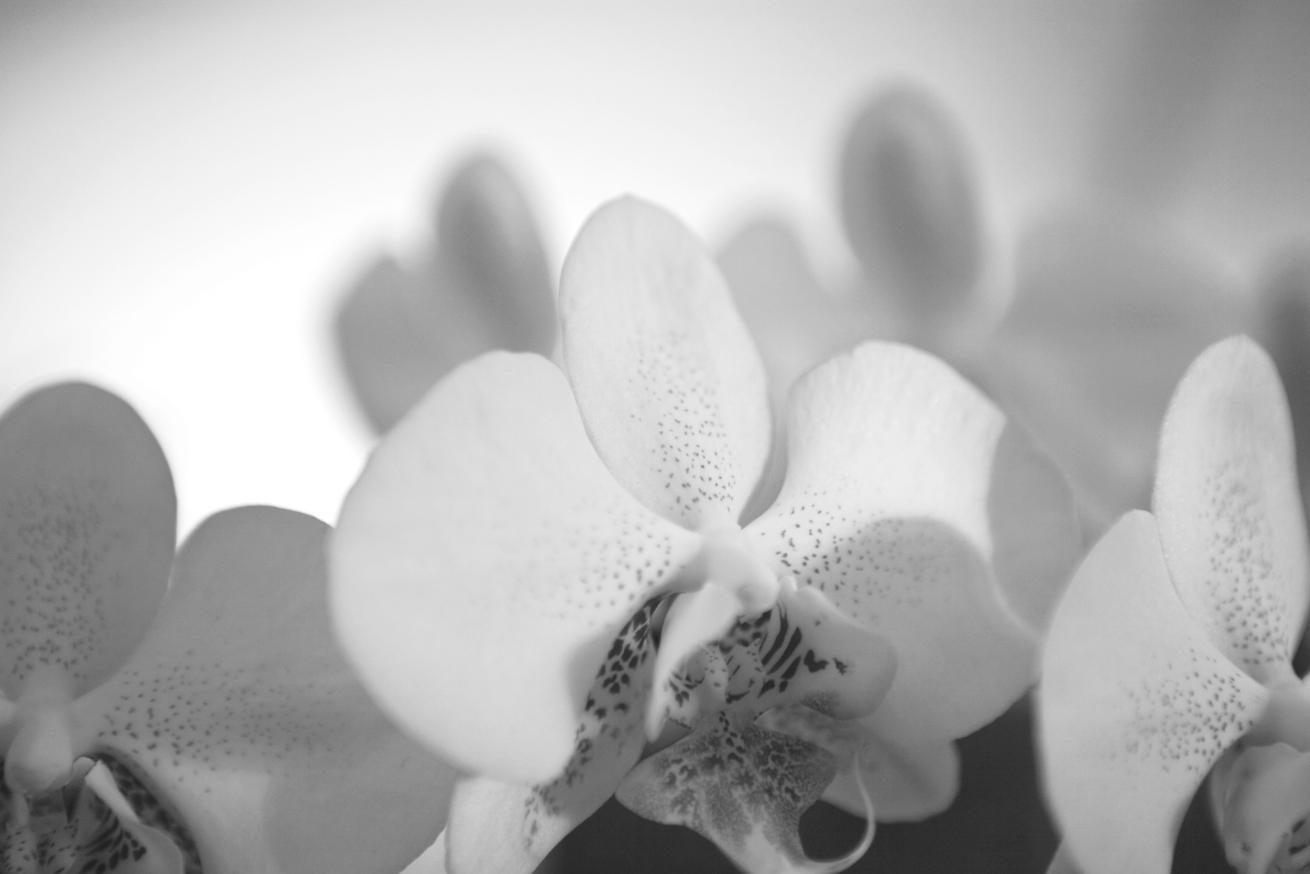 Botanical / Black & White
