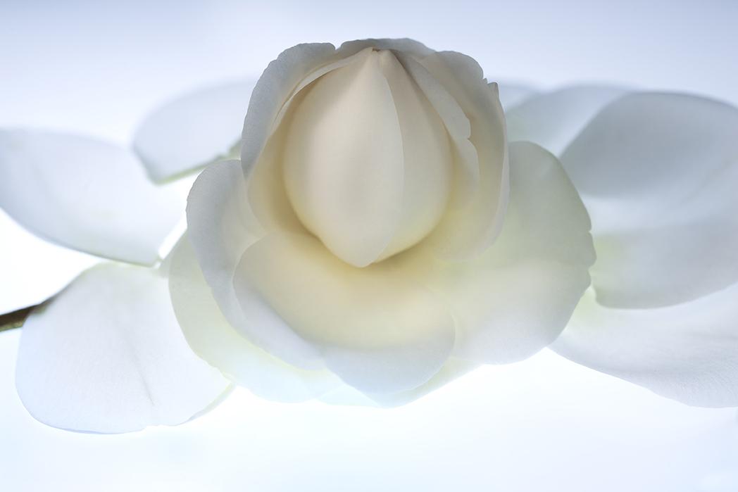 Image No.C0530