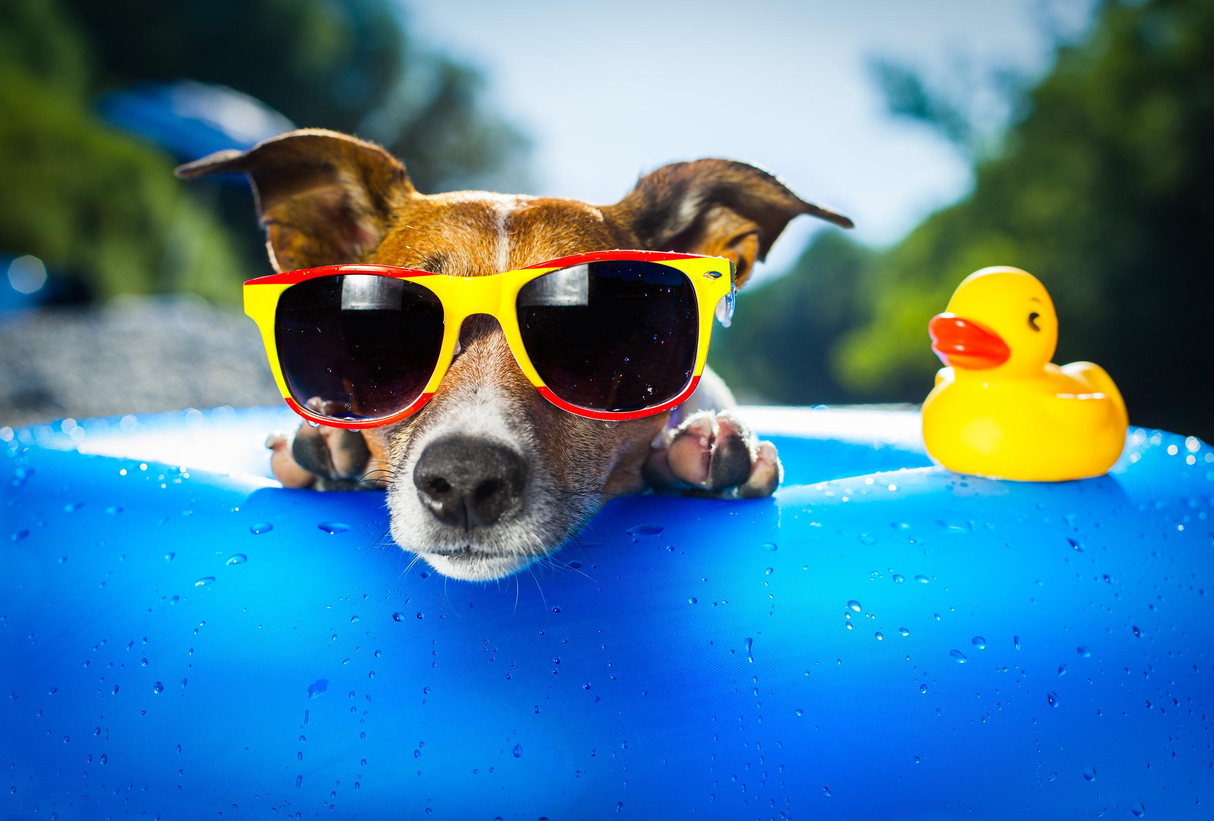 Summer Dog .jpg