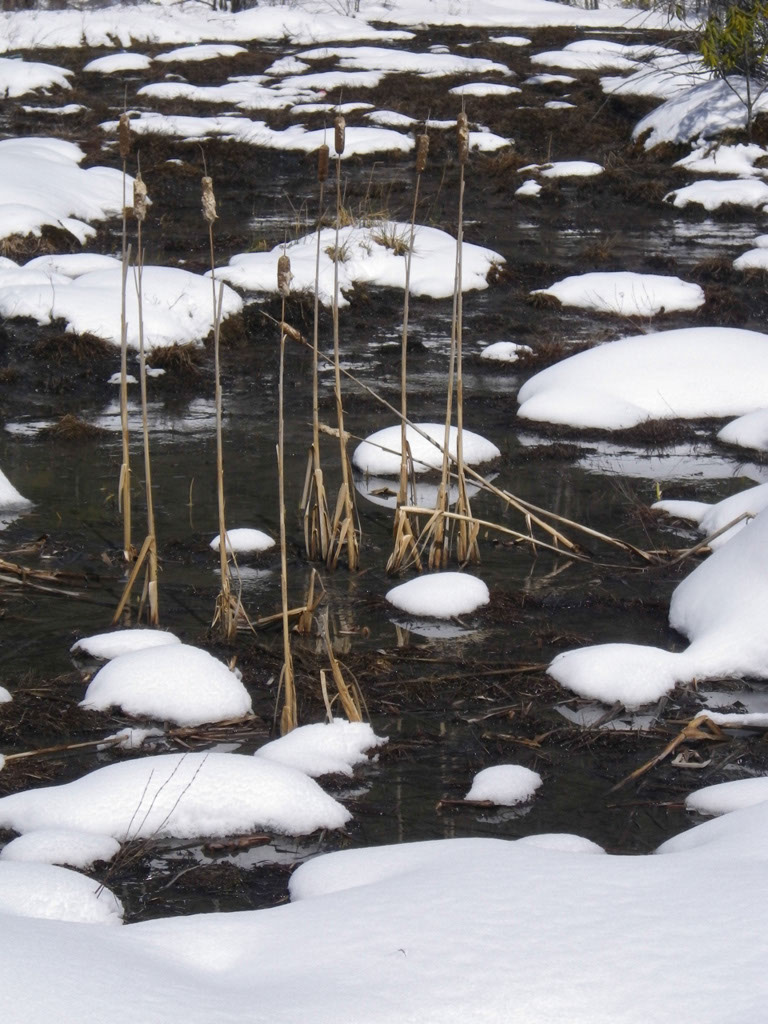 Bog in winter