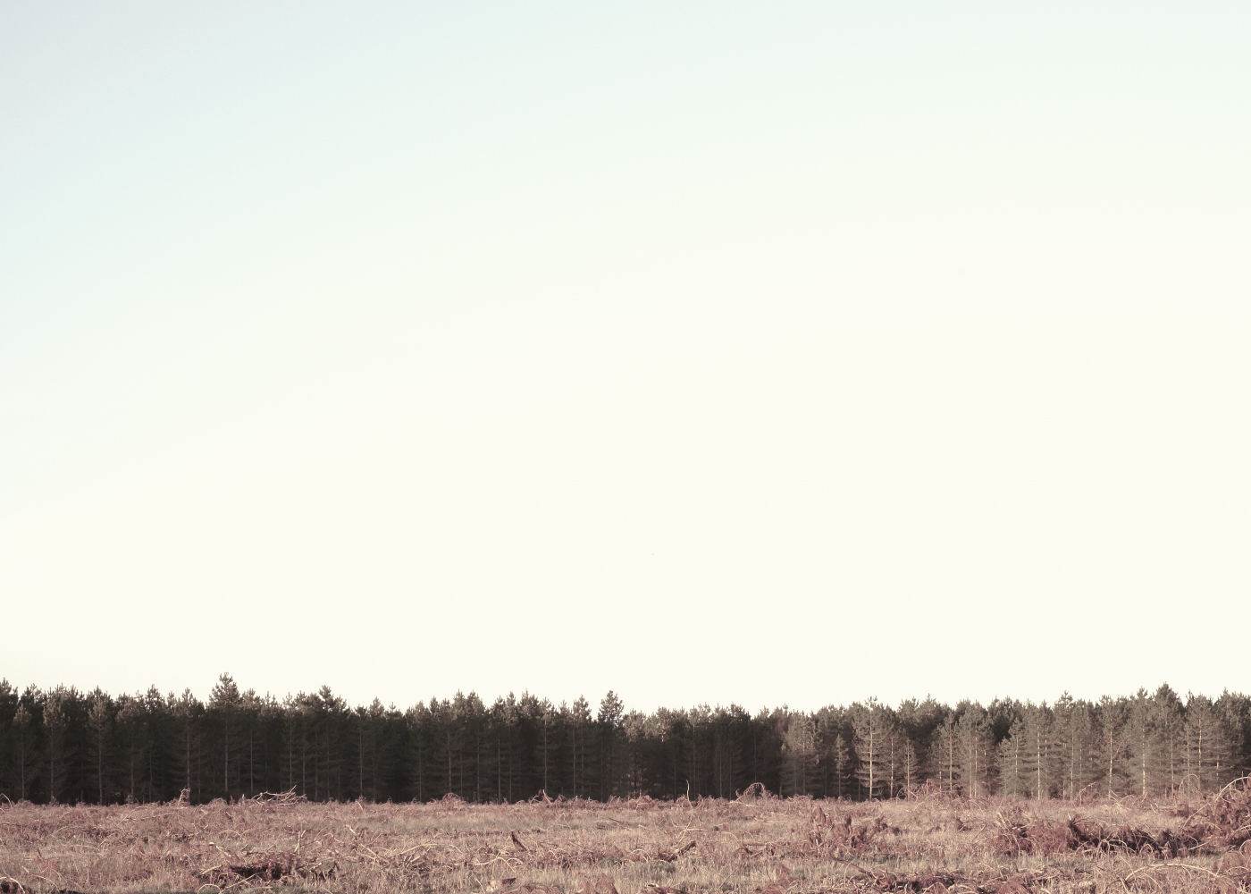 Thetford Forest - Suffolk