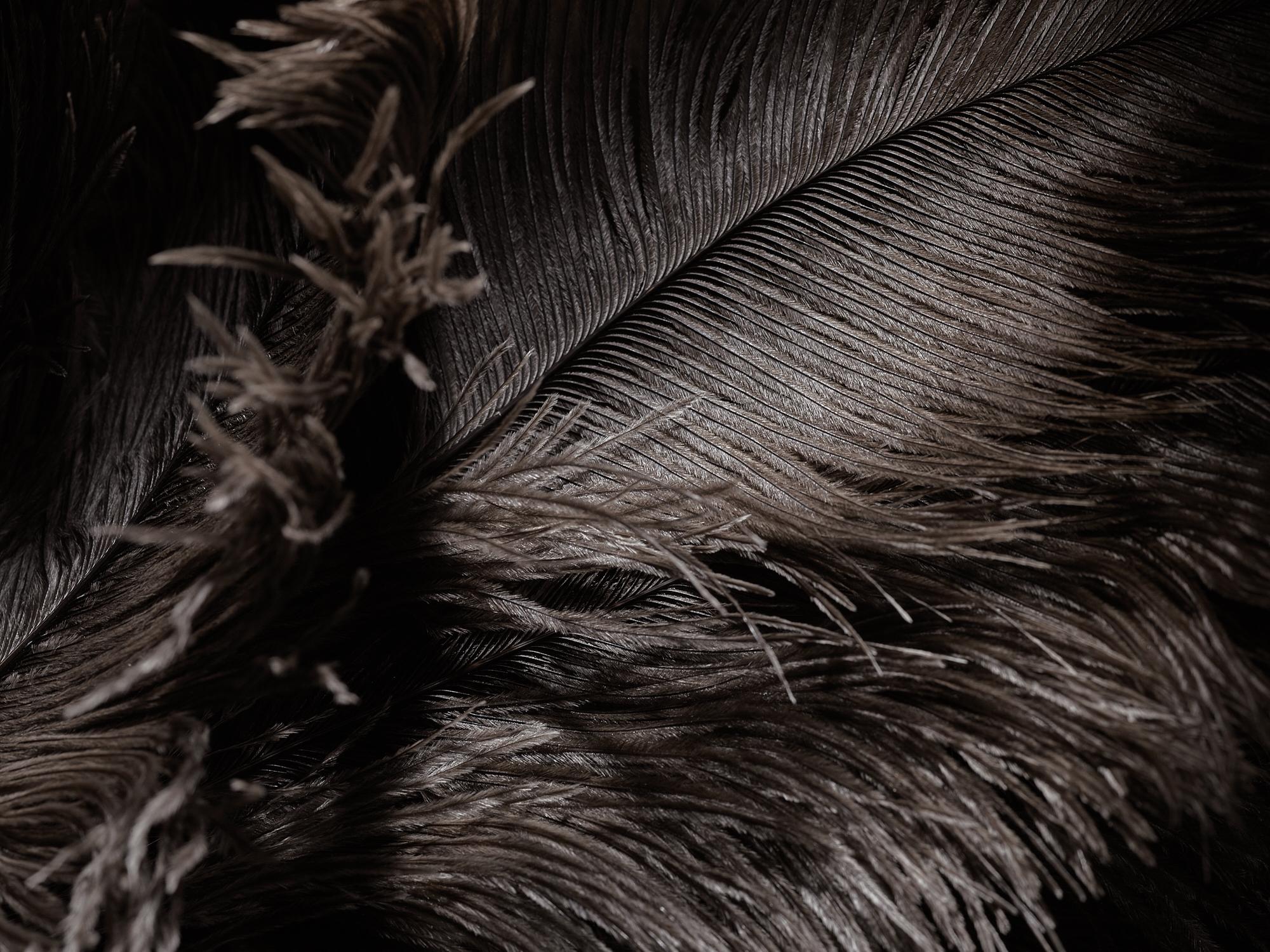 Feathers_171118_0089.jpg