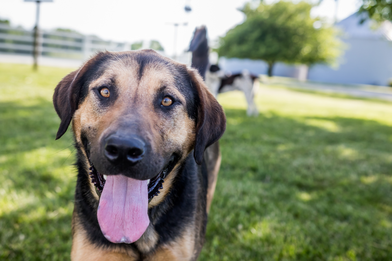 Indiana Pet Photographer - A